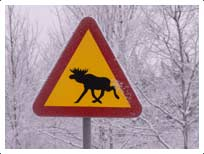 elk_sign_snowy.jpg