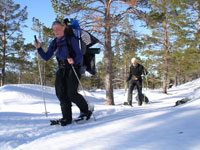 Snowshoeing in Wolverine Country
