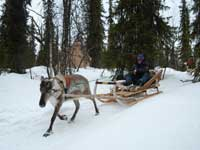 reindeer3.jpg