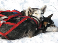 dogsled-faq-1.jpg