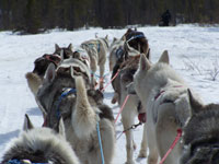 dogsled-faq-2.jpg