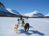 dogsled-faq-4.jpg
