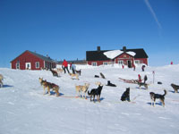 dogsled-faq-8.jpg