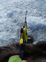 icefish3.jpg