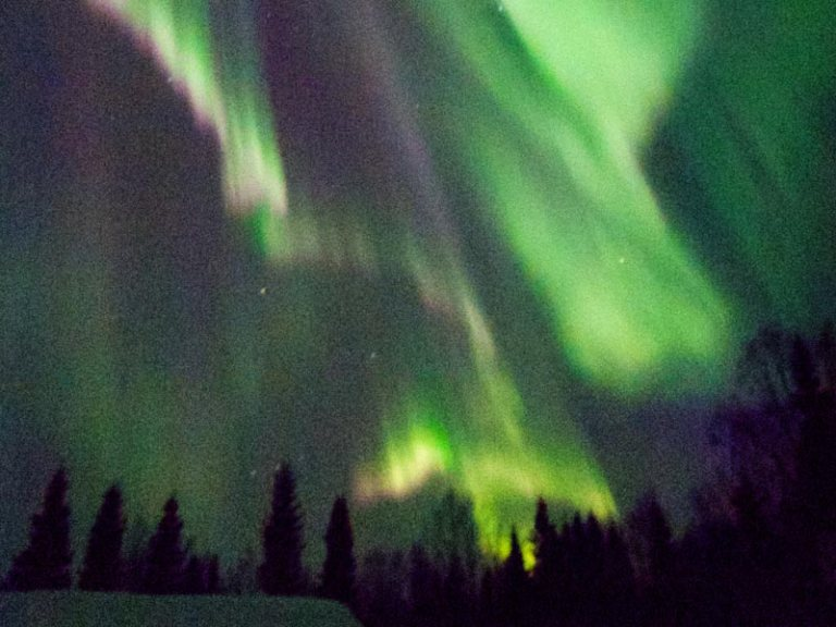 Aurora display during dogsled tour