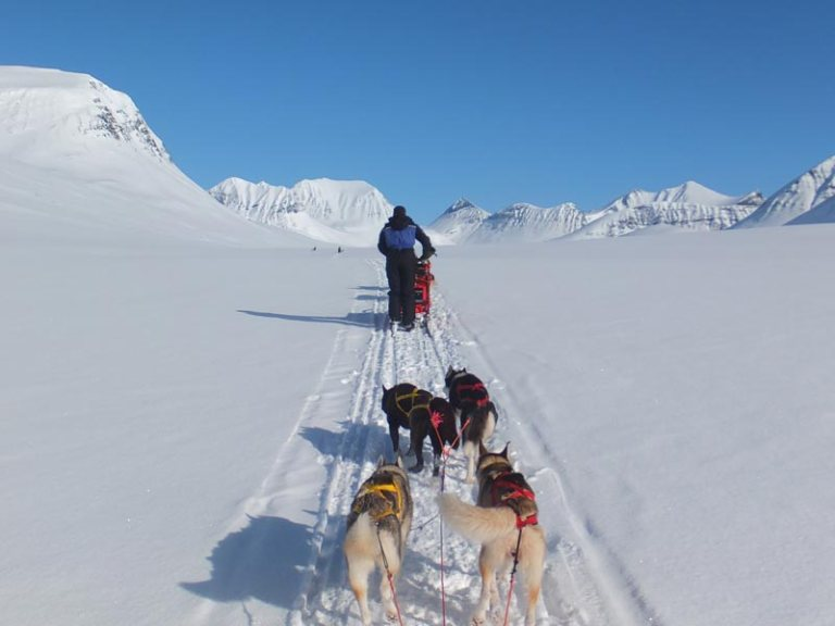 Mountain dog sledding on the King's Trail